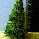 Ver artículos de FUM - Abeto Verde Jaspeado mediano