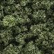 Ver artículos de Woodland Scenics - Matorrales color Verde Oliva
