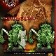 Ver artículos de Avatars Of War - Caudillo Saqueador Bárbaro